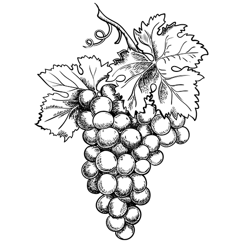 avis, vins de Savoie, Domaine les Vignes de Fechy, vins de Féchy, vins de Cruseilles, Cruseilles, Annecy, Genève, Haute Savoie
