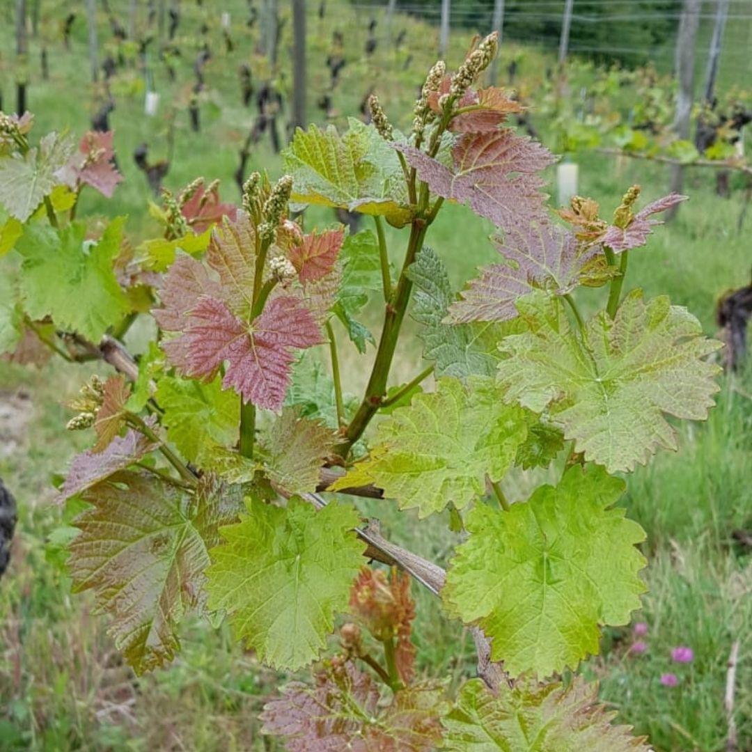label HVE,protection de l'environnement, agriculture raisonnée, exploitation bio, les vignes de Fechy, domaine viticole, vins de savoie, Cruseilles, Annecy, Geneve, Haute Savoie