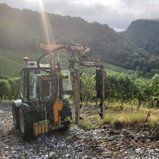 rognage, travaux de juin, travaux dans les vignes, saison, saisonnalité, travaux viticoles, domaine les vignes de féchy, vins de Savoie, cruseilles, Annecy, Geneve, Haute Savoie